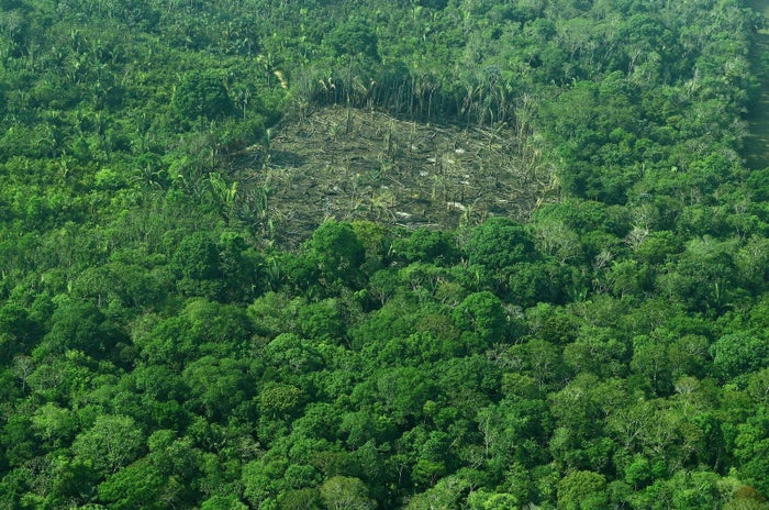 An aerial view of deforestation in Brazil's Amazon rainforest.