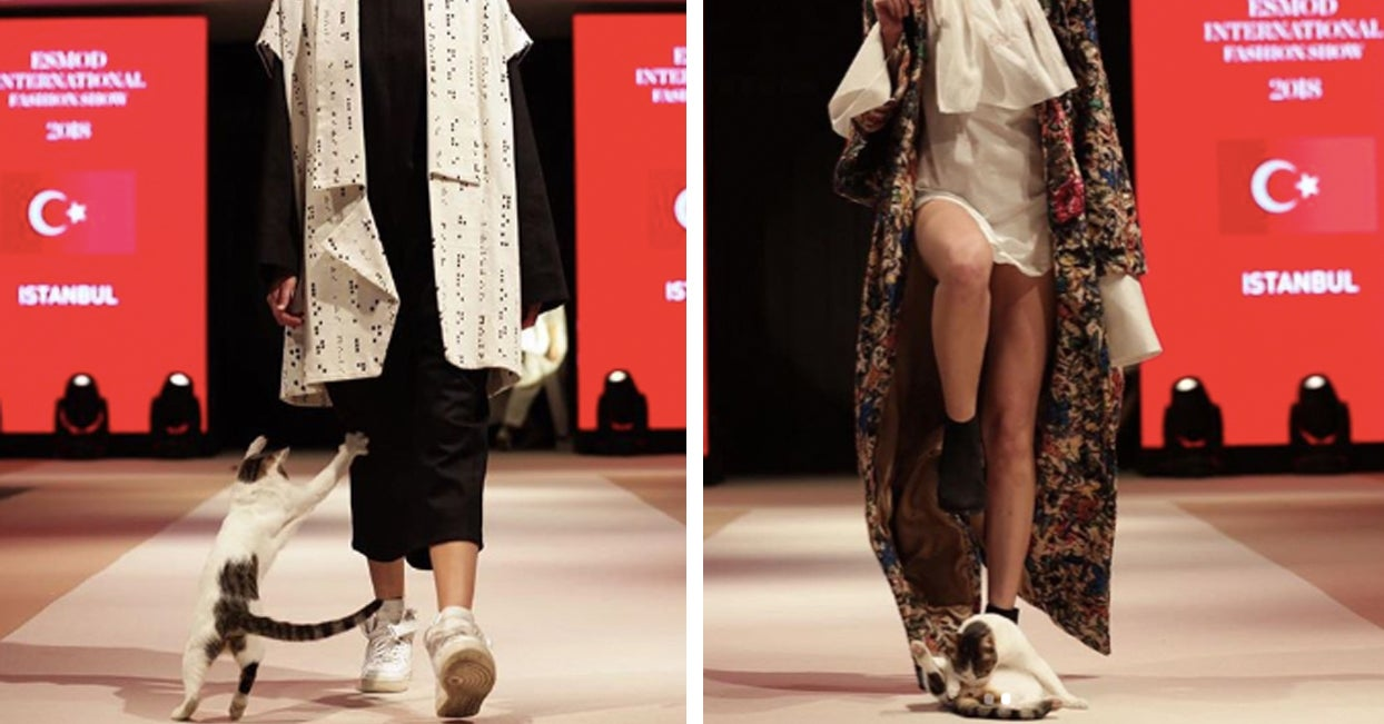 a41cb369ca A Cat Made A Surprise Appearance At A Fashion Show And People Love It