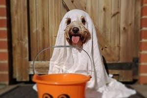 51 Of The Goodest And Spookiest Dogs You'll See This Halloween
