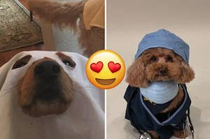 19 Of The Most Adorable Costumes Worn By Pets This Halloween