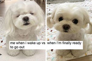 28 Tweets About Dogs That Even Cat People Will Smile At