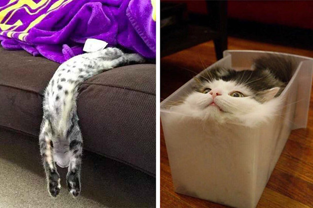 These 22 Cats Are Proof That All Cats Are Liquid