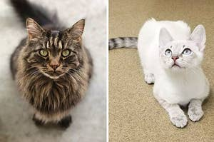 17 Cats Who Are So Beautiful, They Could Probably Be Supermodels