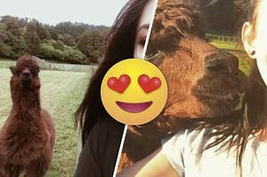 This Alpaca Photobombing A Girl's Selfies Is Everything You Need Going Into The Holidays