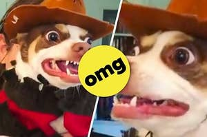 This Guy Dressed His Dog Up For Halloween And The Pup Was Seriously Excited