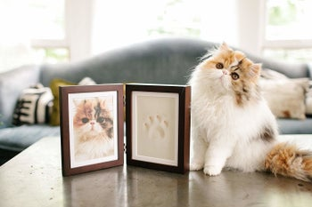 a cat next to the picture frame