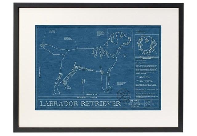 The poster with a labrador retriever