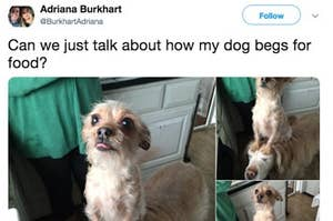 21 Tweets That Non-Dog Owners Will NEVER Understand