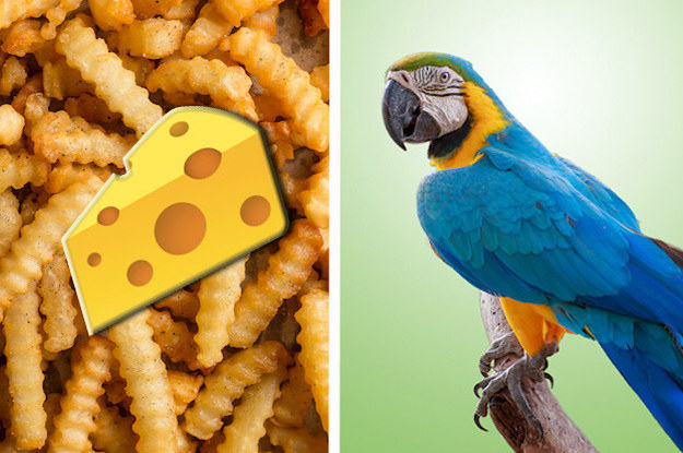 Tell Us If You Put Cheese On These Foods And We'll Tell You Which Kind Of Bird You Are