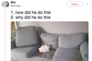 23 Tweets Non-Cat Owners Will Never BEGIN To Understand