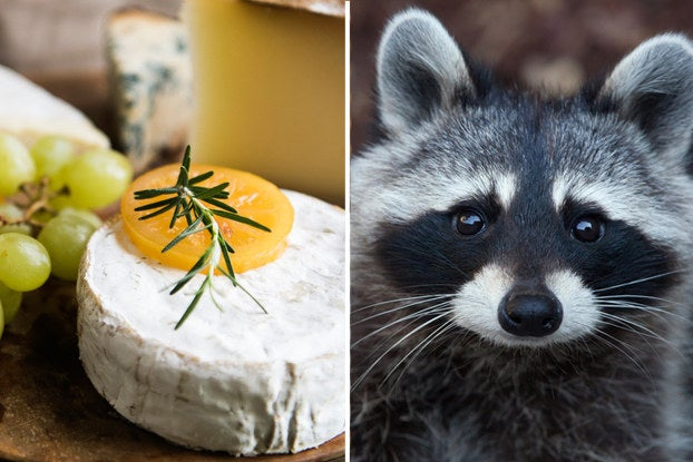 The Cheese Board You Make Will Reveal The Animal You Are In Bed
