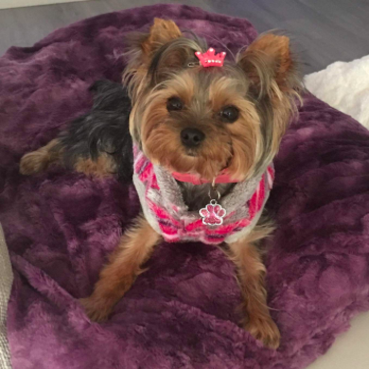 another reviewer's pic of a smaller dog sitting on a purple blanket