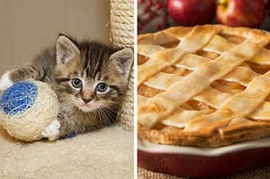 If You Tell Me Which Kittens You Like Best, I'll Tell You What Dessert You Like Best