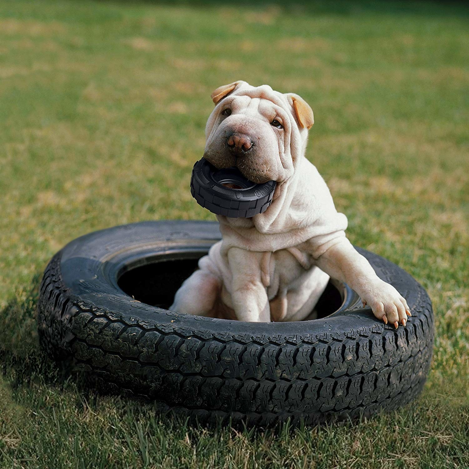 dog playing with the tire-style dog toy