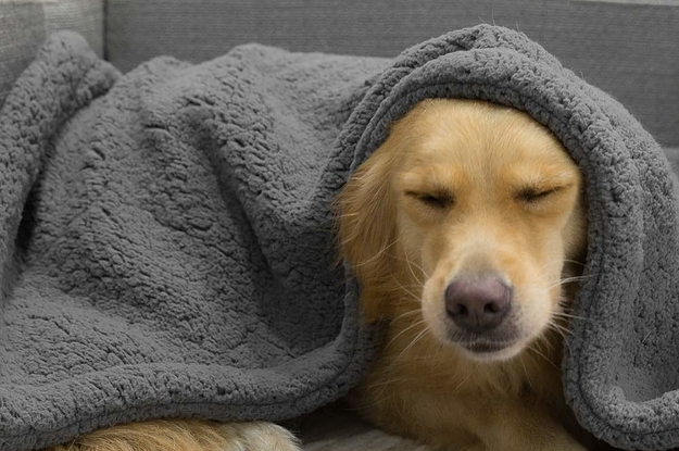 21 Things You Need If You're Totally Obsessed With Your Pet