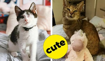 17 Times Cats Saved The Internet This Week
