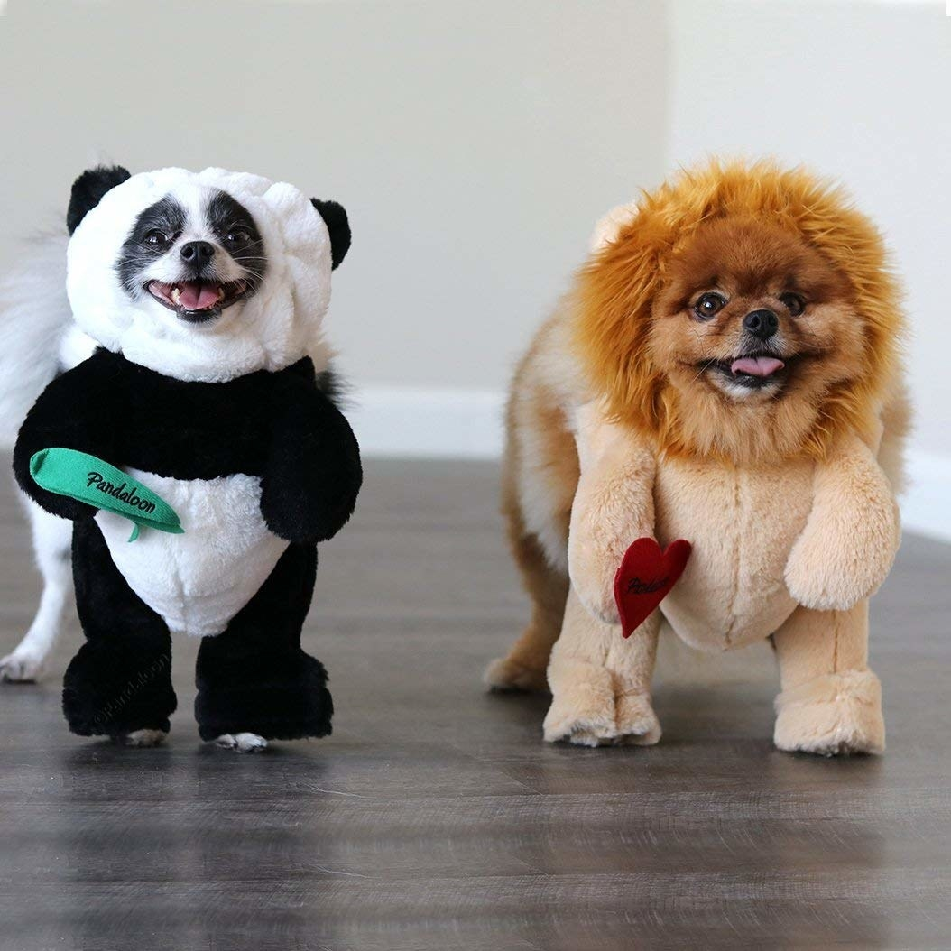 two small dogs, one dressed as a panda and one as a lion