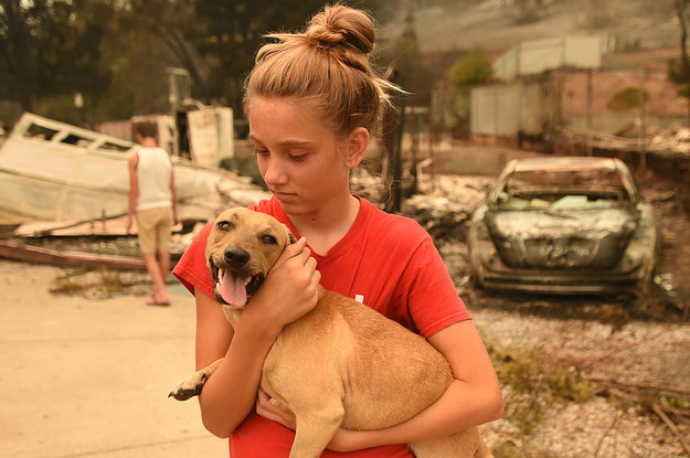Here's How To Help Those Affected By The California Wildfires