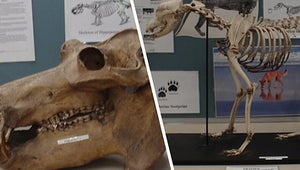 Four Rare Animal Skeletons Have Been Stolen From A University Campus Museum