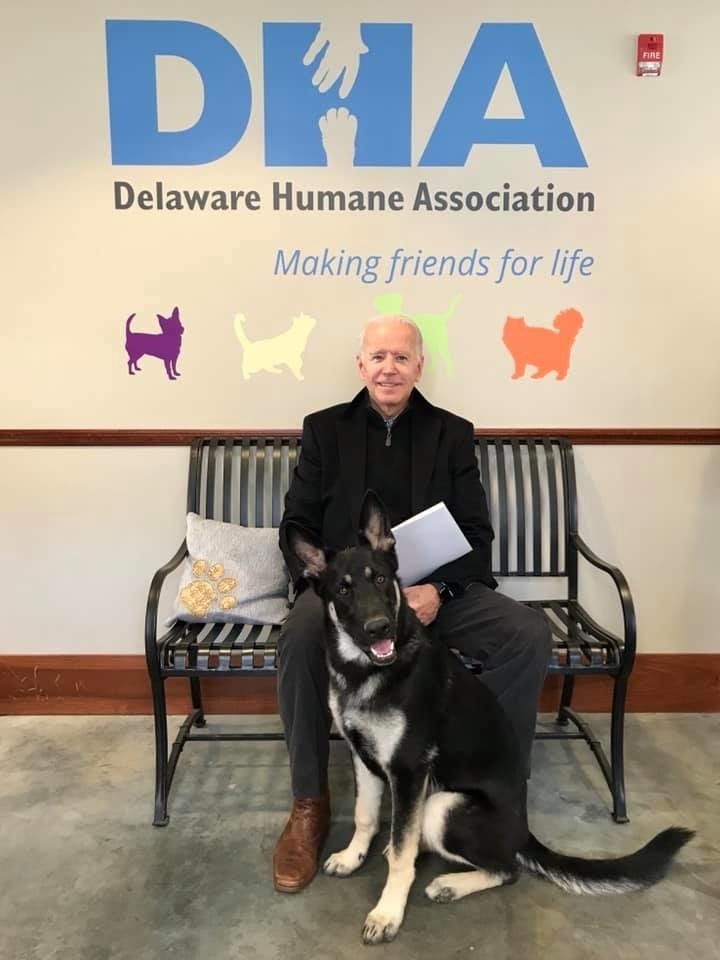 Joe Biden Adopted A Rescue Dog That Looks Like The Dog Version Of Himself