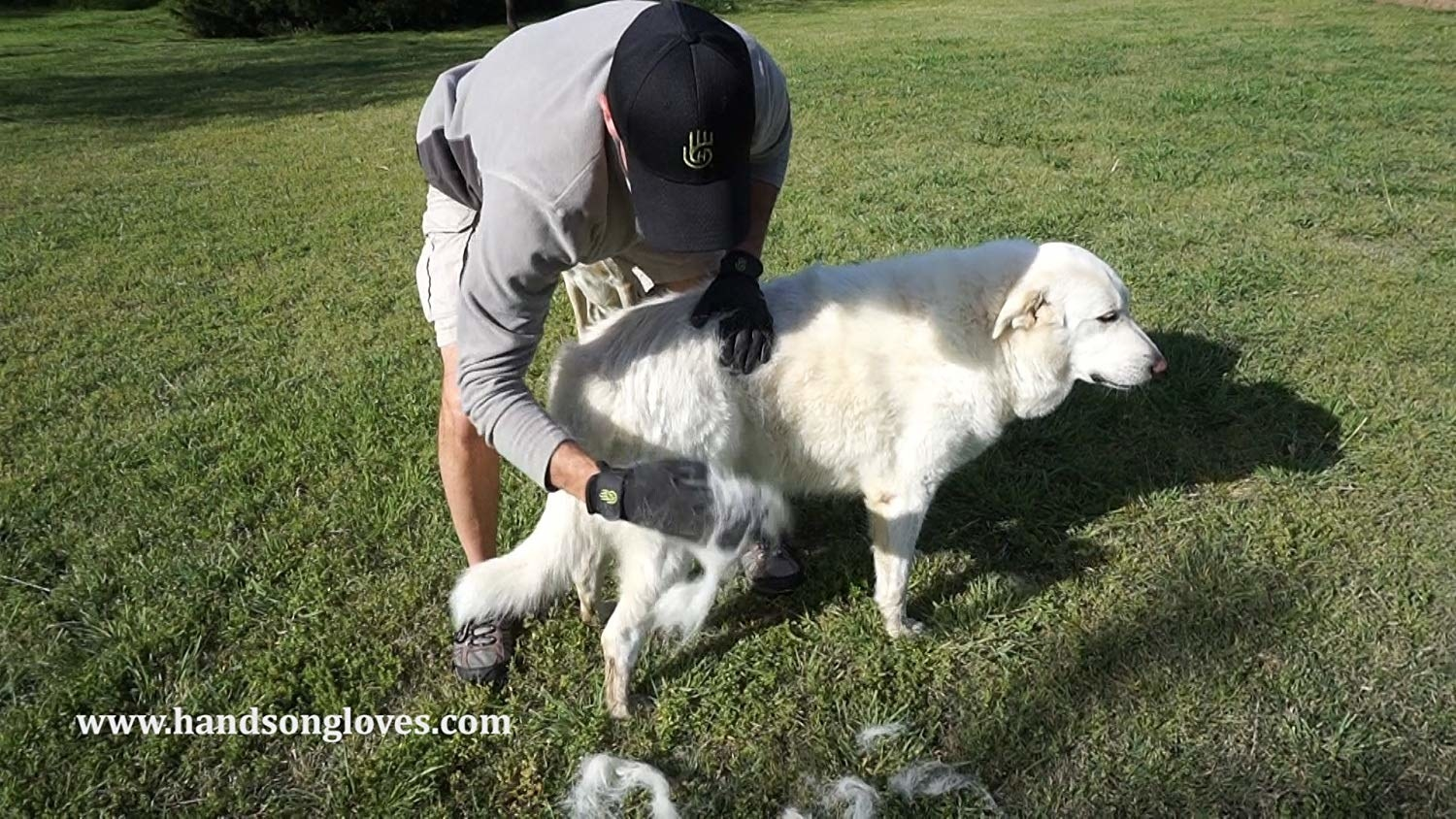 A dog being brushed with the gloves, with clumps of hair coming off
