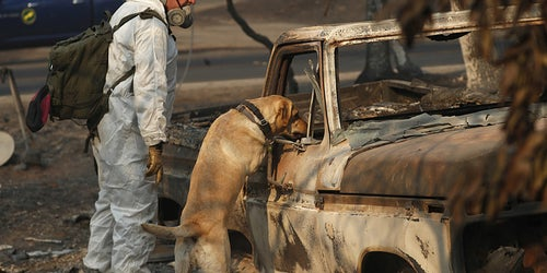 After California's Worst Wildfire, Rain May Wash Away Ash, Smoke, And Victim Remains