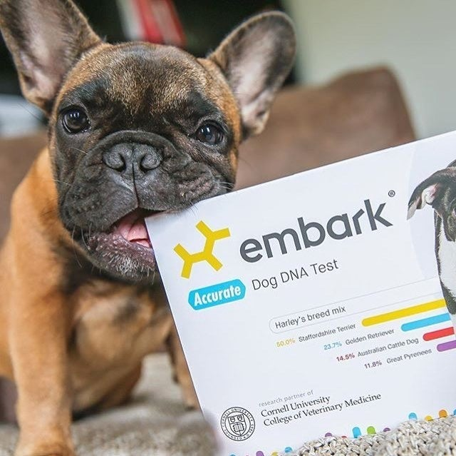 """It also tests for over 160 diseases and drug sensitivities!Promising review: """"Very cool. My dog is a rescue and I was told he was a Border Collie mix. His personality lead me to do a test because he just didn't have the personality a border collie. Come to find out he's a shih tzu–pit bull mix, which makes way more sense."""" —dede123Get it from Amazon for $169."""