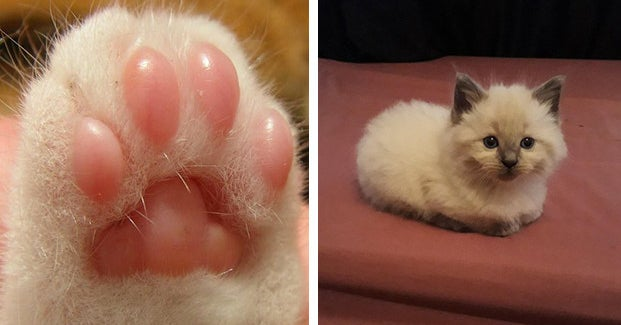 16 Things About Cats That Cat People Find Disgustingly Endearing