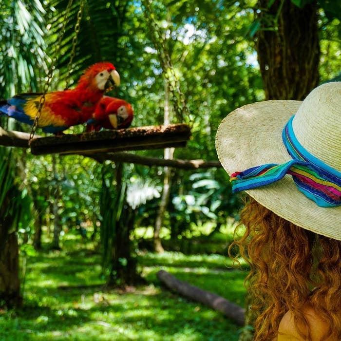 Encontrarás este centro ecoturístico en medio de la reserva de la biósfera Montes Azules, cerca de Palenque. Ahí podrás pasear en una balsa y conocer el lugar donde anidan las guacamayas rojas. ¡Ojo! Al estar en medio de la selva, también es muy probable que te topes con monos, cocodrilos, coatíes y tucanes.