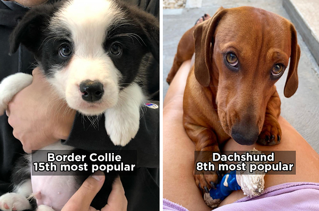 16 Fascinating Facts About The Dog Breed From Coco