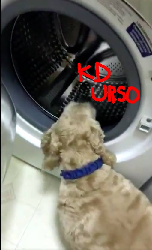 Depois, quando o urso já foi levado para outro cômodo, o dog ainda vai procurar pelo amigo dentro da máquina de lavar e da secadora.