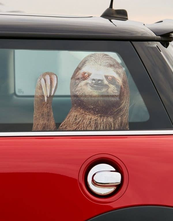A Sloth Car Decal If They Re Someone Who Prefers Having Driving Companion This One Is Sure To Turn Heads