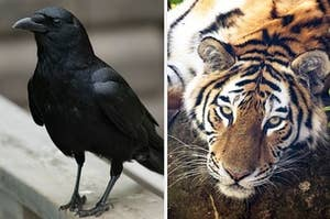 What Personality Traits Do You Associate With These Animals?