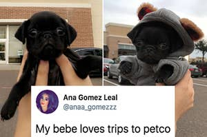 17 Doggo Posts From This Week That Pleased Me Greatly