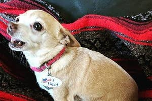 112 Dogs And 1 Rabbit That May Have Just Committed Voter Fraud