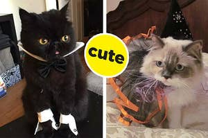 15 Halloween Cats In Need Of Some Really, Really Good Boops