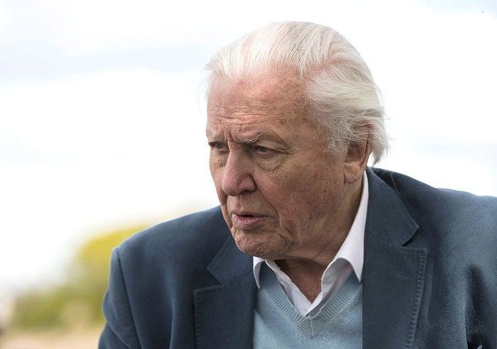 A Netflix Original voiced by Sir David might be a surprise for some. In the past few years, Attenborough has been more associated with being the voice for highly regarded nature documentaries on the BBC, including Planet Earth II and Blue Planet II (although he has also presented documentaries for Sky). He is due to be the voice of the BBC's Dynasties, which is out later this month.