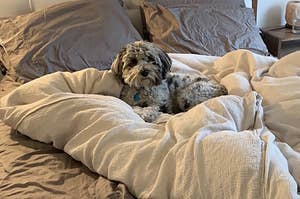 13 Steps On How To Make Your Bed When A Dog's On It