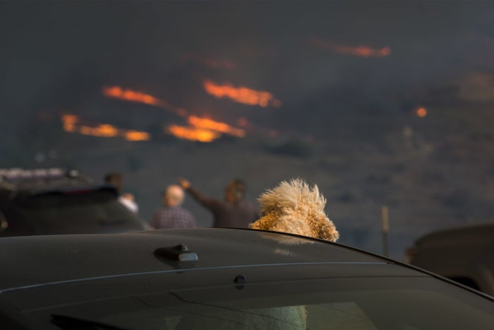 A dog watches from a car in Malibu as flames from the Woolsey fire approach the coastal city.