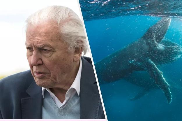 Sir David Attenborough Will Present A Huge Netflix Original Nature Series