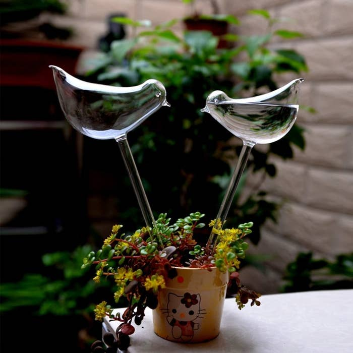 glass bird-looking bulbs filled with water inserted into a container plant