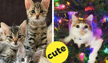 18 Times Cats From This Week Made You Say,