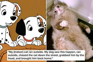 Reddit Users Are Sharing The Smartest Things Their Pets Have Done And OMG