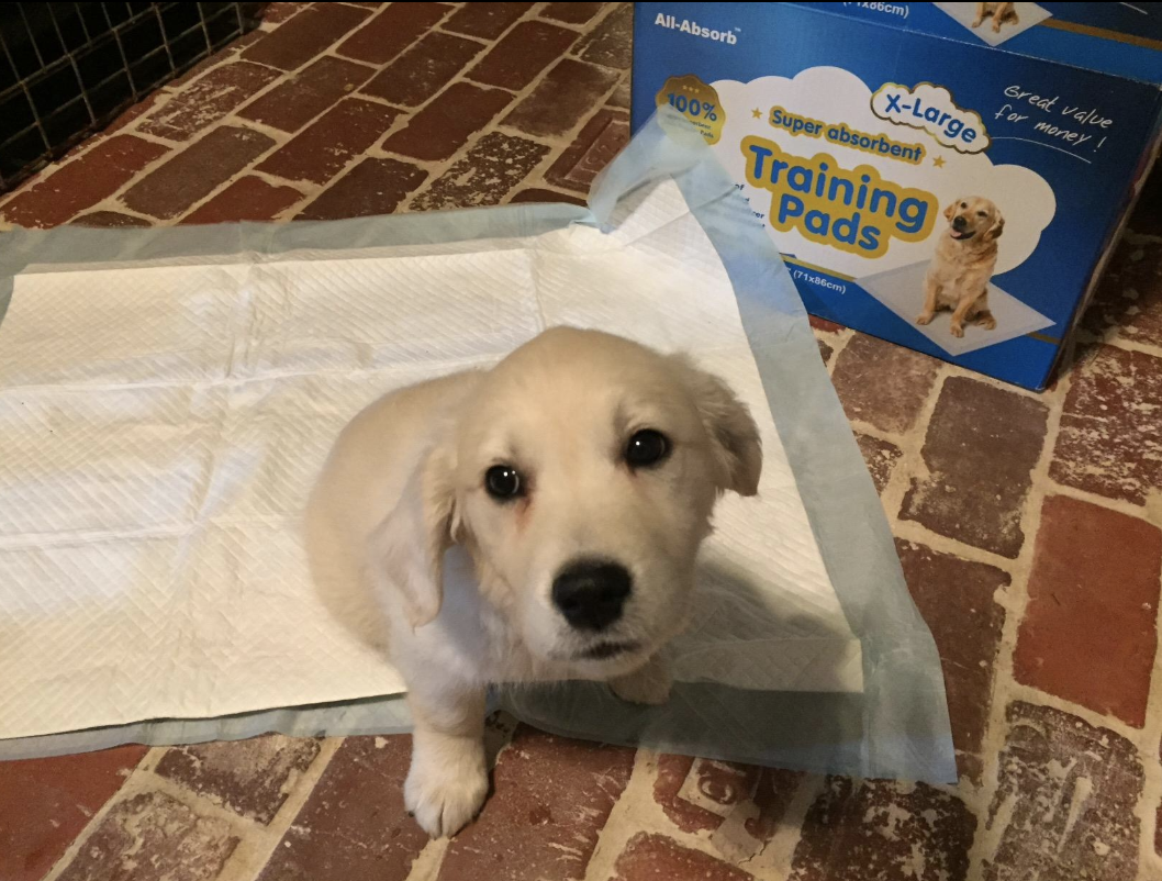 Reviewer photo of puppy on potty training pad