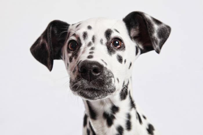 Top 50 Most Popular Dog Names Of 2018