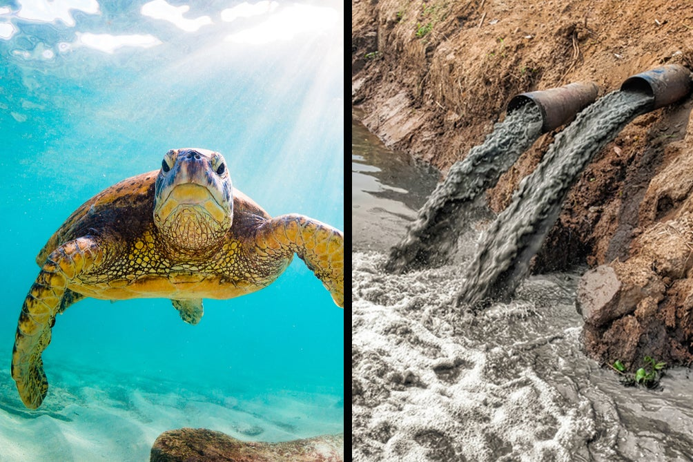 Great Barrier Reef Turtles Near The Coast Are Suffering The Consequences Of Chemical Run-Off