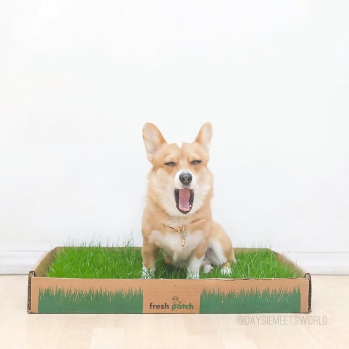 Potty training your pup can be frustrating when using pee pads, but the living grass from Fresh Patch absorbs liquids and controls odors naturally, turning puppy training into a stress-free experience. A simple, easy subscription box that provides real grass training pads that are all-natural, Fresh Patch is completely safe to use in the home. Dogs instinctively want to go on real grass, so training is a breeze! Fully disposable, there is no cleaning or maintenance – simply replace your discarded unit with a new Fresh Patch when it arrives right at your doorstep!