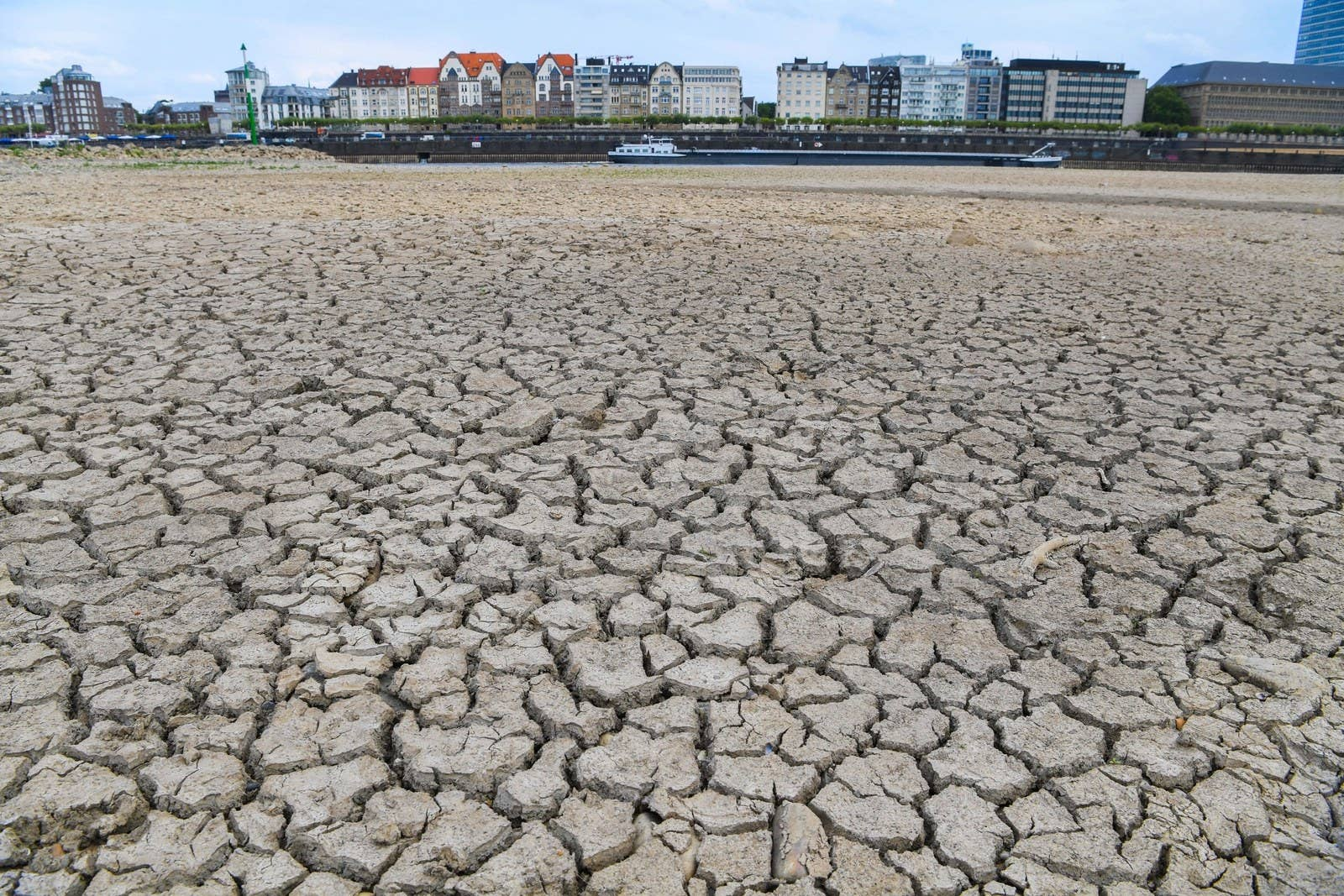 The riverbed of the Rhine dried out on Aug. 8 in Düsseldorf, Germany.
