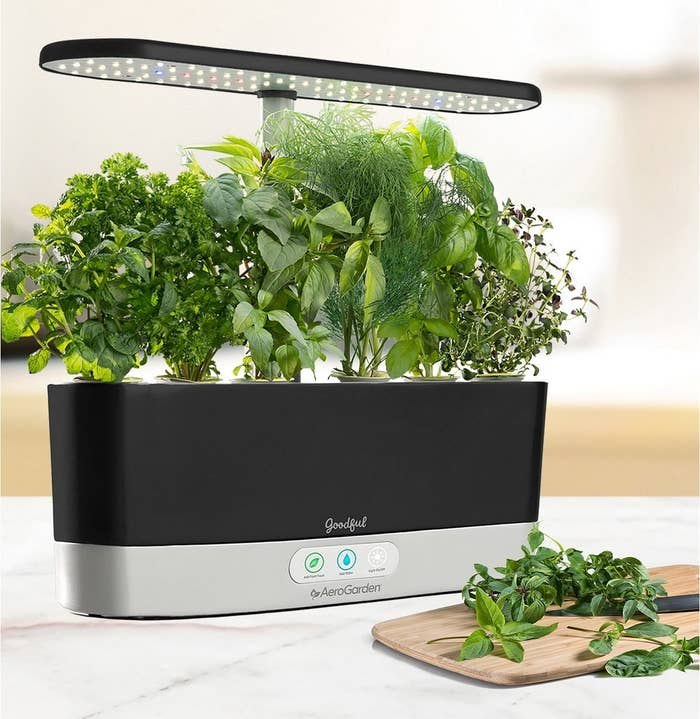 The kit includes the countertop garden, Genovese basil, curly parsley, dill, mint, thyme, Thai basil, and Miracle-Gro plant food. It'll alert you when the plants need more food or water, so you don't need a green thumb for it to work! Check out our full review on the Goodful Aerogarden.Get it from BuzzFeed's Goodful line, exclusively at Macy's for $189.99 (available in two colors).