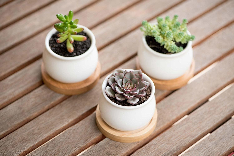 three succulent pots